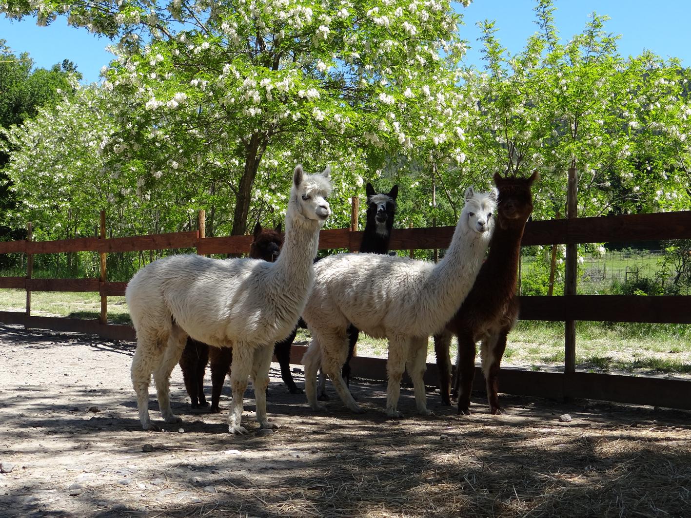 Parc animalier à Lussas